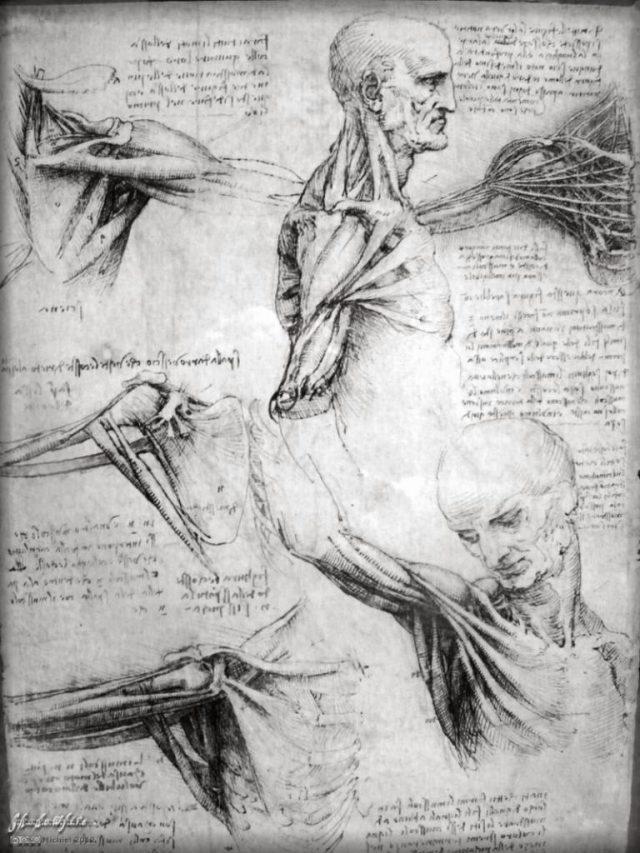United Kingdom, England, London, Buckingham Palace, Queens Gallery, Leonardo da Vinci, anatomy