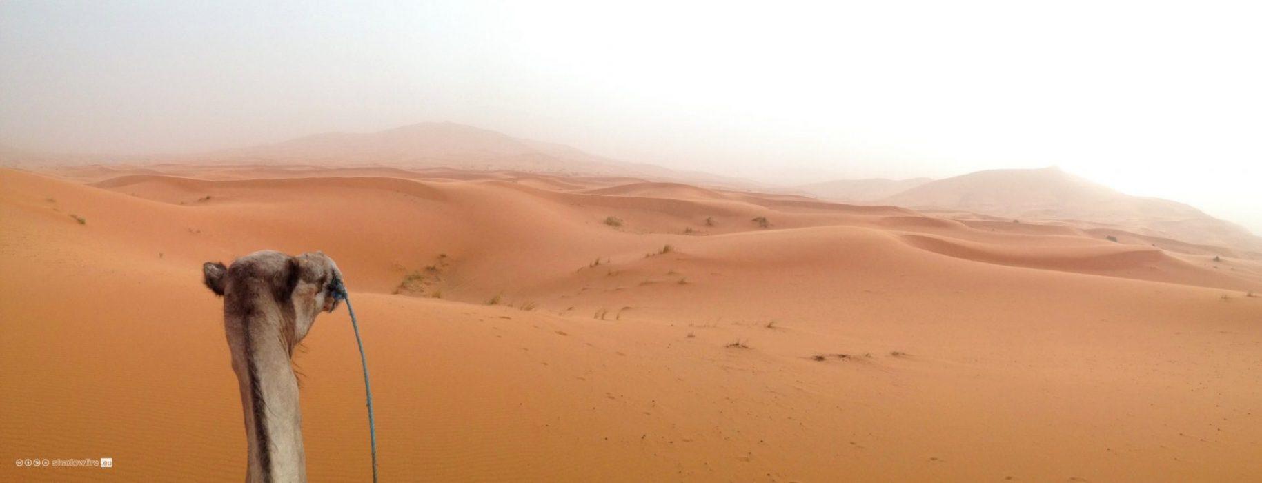 Morocco, Sahara, desert, camel
